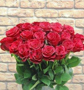 Розы 60 см