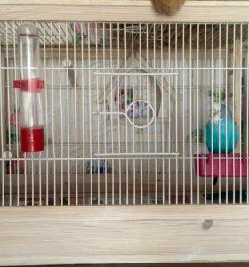 Попугаи с клеткой
