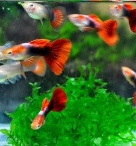 Аквариумные рыбки, улитки и растения.