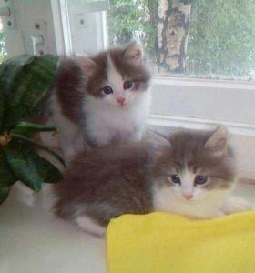 Милые кошечки в добрые руки!