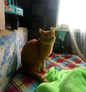 Большой рыжий кот