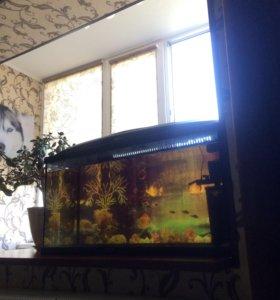 Продам аквариум на 100л.