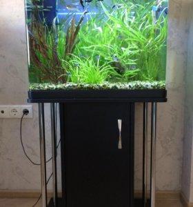 Аквариум с рыбками, водоросли, фильтр, свет.