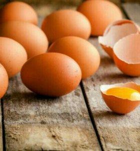 деревенские куриные яйца, свежие