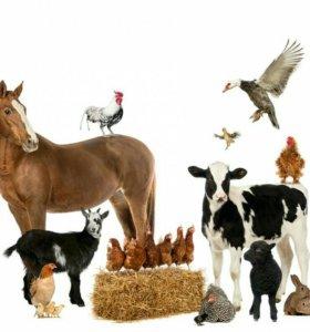 Корма для с/х животных и птиц