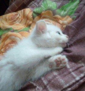 Котята от вислоухой кошечки
