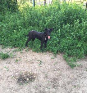 Собака 17 кг (небольшая) в добрые руки