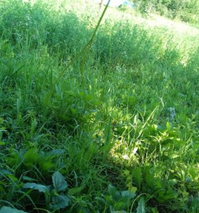 Пакос травы