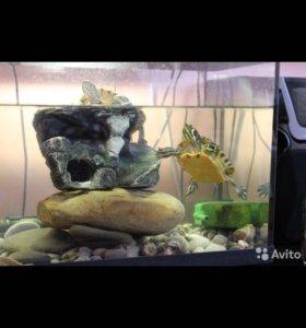 Аквариум с черепахами и оборудованием
