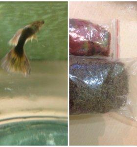 Набор рыбок и корма