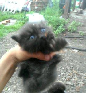 Одам котёнка