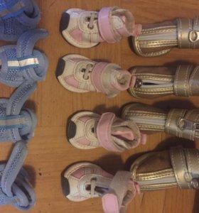 Обувь для собачек мелкой породы
