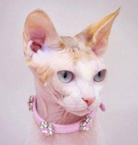 Ошейник для кошки, из Финляндии.