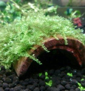 Укрытие сом мох креветка коряга