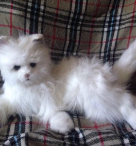 Кошка-робот Lulu