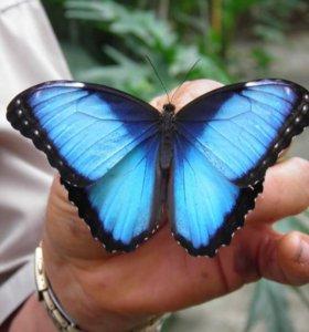 Живые бабочки в Казани в подарок