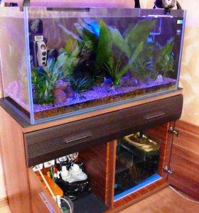 Открытый аквариум в стиле ADA