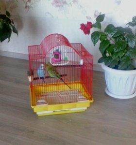 Попугай, девочка