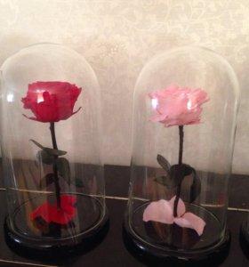 Роза с колбе