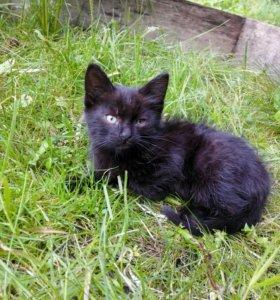 Котёнок мальчик 1,5 месяца