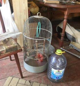 Клетка для средних и мелких попугаев