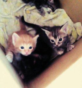 Шикарные котятки Добрым Хозяевам