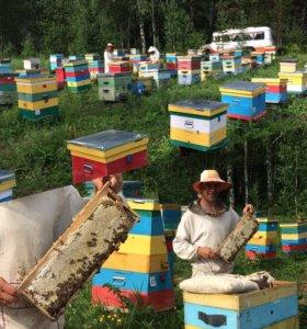 Натуральный наш мёд!