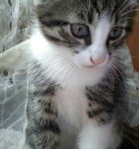 Отдам котёнка