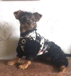 Продам щенка метис