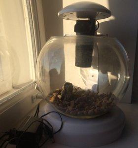 аквариум 1 литр