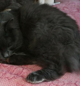 Домовенок кот