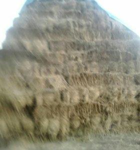 Салома авсеная сено луговой в тюках