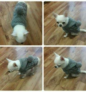Одежда, свитер для собачки