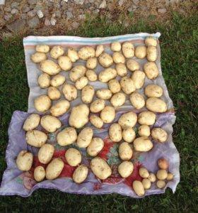 Молодой картофель кг