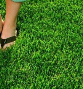 Озеленение.Благоустройство.Газоны. Живая изгородь.