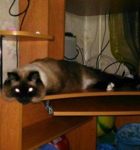 Потерялся кот.