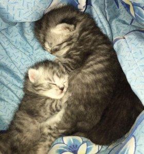 Милые котики 💕🙈
