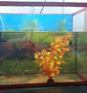 Аквариум+фильтр+рыбки+отсос+отсос+2 кондиционера.