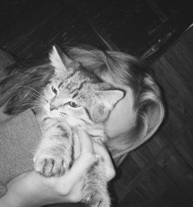 Отдам в добрые руки кошку.