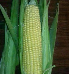 Кукуруза с поля.Бондюэль.Варка 15 минут