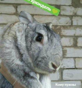 Кролики 2года и крольчата 2мес