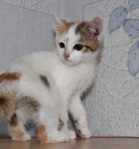 Котенок в добрые руки Леся, кошка в дар