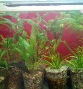Растения аквариумные,разные.