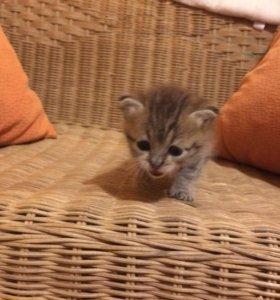 Отдам в добрые руки котёнка