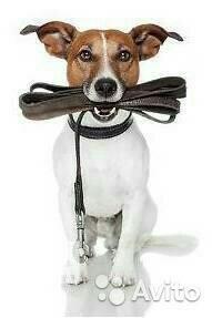 Выгул послушных собак