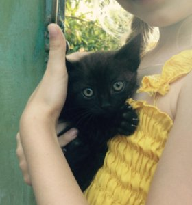 Котятки даром