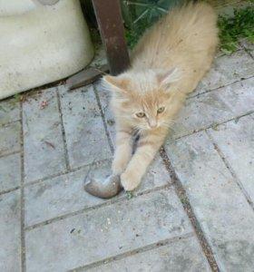Коты мышеловы