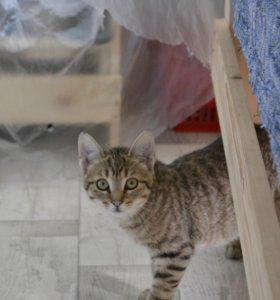Кошка 3 месяца