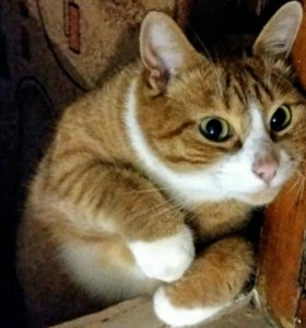 Отдам в ответственные руки кота