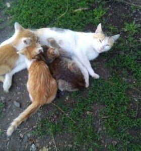Продаю котят 🐈